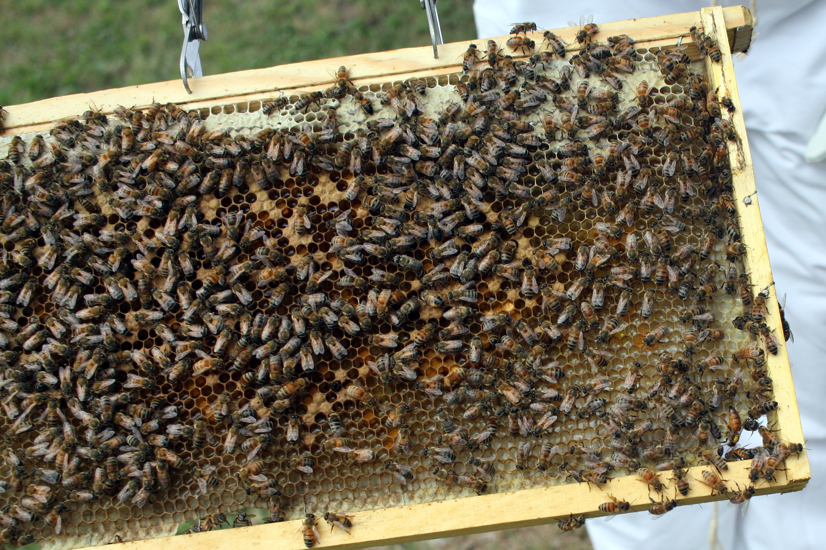 We have bees!
